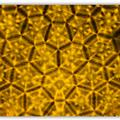 Boxfish shell inspires new materials for body armor and flexible electronics