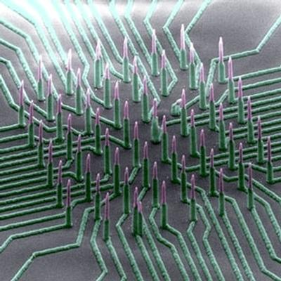 'Neuron-reading' nanowires could accelerate development of drugs to treat neurological diseases