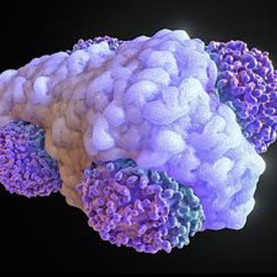 Smart molecules trigger white blood cells to become better cancer-eating machines