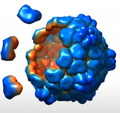 Nature Nanotechnology webinar with Nicole Steinmetz
