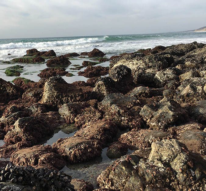 Ocean acidification is transforming California mussel shells